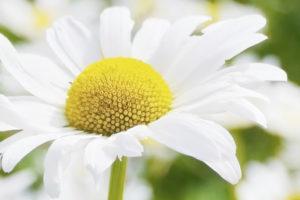 Santé / Aromathérapie